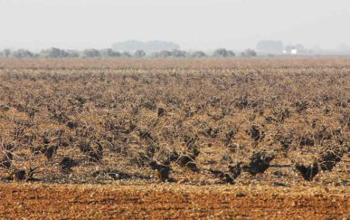 ¿Más tierra seca?: Foto de José Manuel Cañas Reíllo (2015)